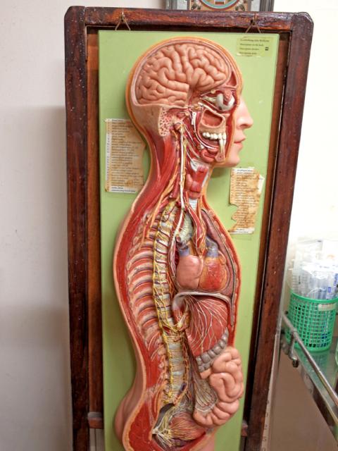 豊島区の衞藤医院 人体模型